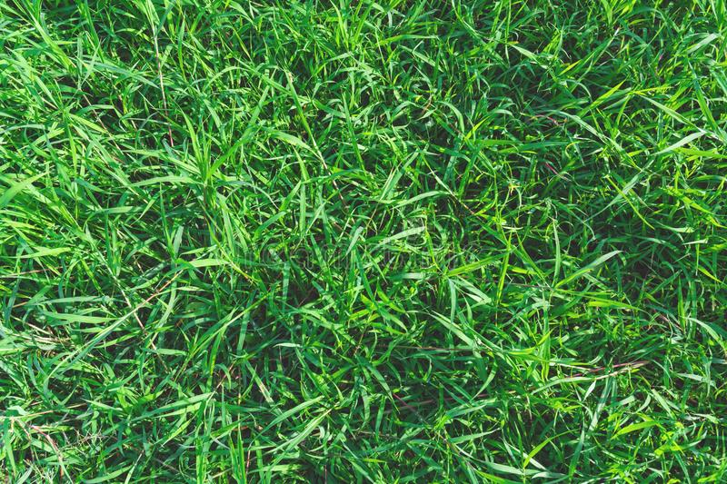 Top view and close up empty green grass field. Green field of gr stock photography