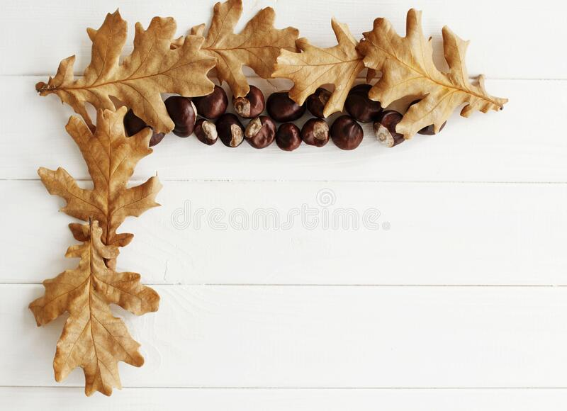 Top view close up picture of autumn dry leaves and chestnuts over white wooden background. Flat lay autumn background stock image