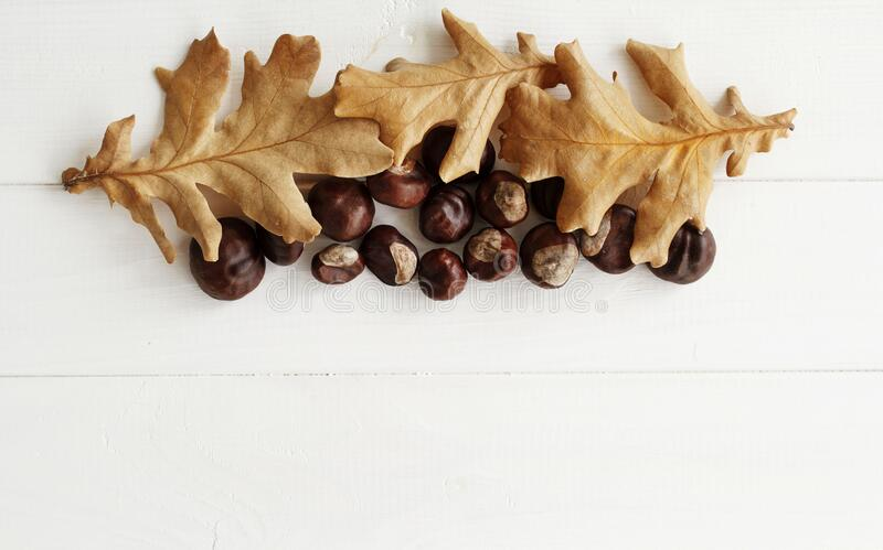 Top view close up picture of autumn dry leaves and chestnuts over white wooden background. Flat lay autumn background royalty free stock image
