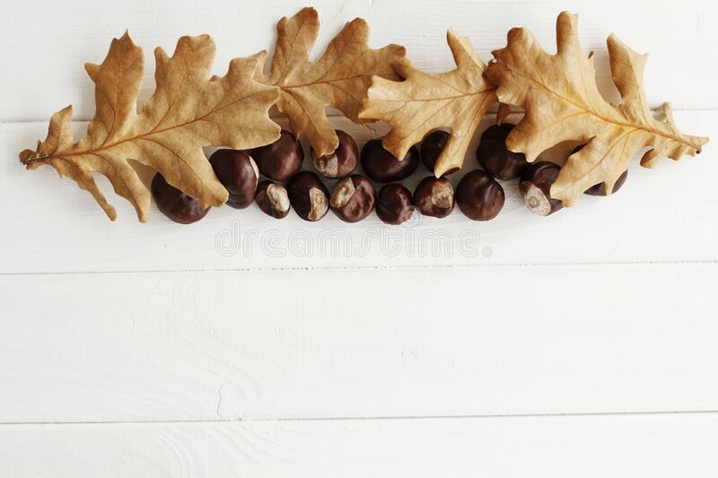 Top view close up picture of autumn dry leaves and chestnuts over white wooden background. Flat lay autumn background royalty free stock photo