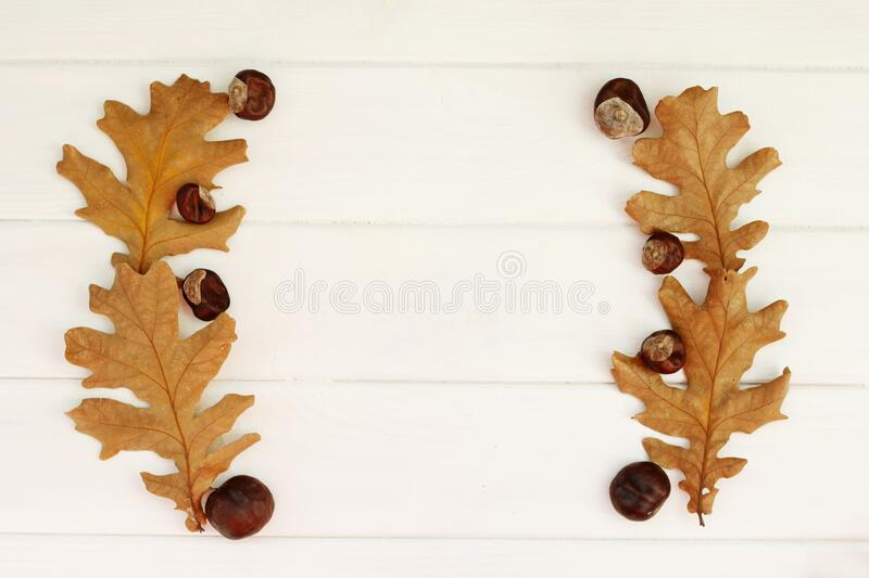 Top view close up picture of autumn dry leaves and chestnuts over white wooden background. Flat lay autumn background royalty free stock photos