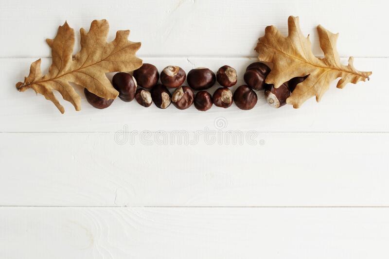 Top view close up picture of autumn dry leaves and chestnuts over white wooden background. Flat lay autumn background royalty free stock photography