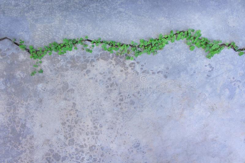 Top view colorful green plants in lines patterns growing on concrete cracks floor, nature background royalty free stock photo