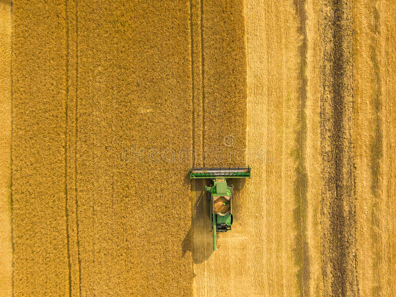 Top view combine harvester gathers the wheat at sunset. Harvesting grain field, crop season royalty free stock image