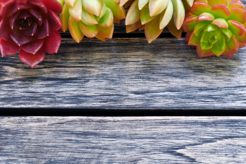Top view cute colorful succulent plant with copy space for text on wooden table background. royalty free stock photos