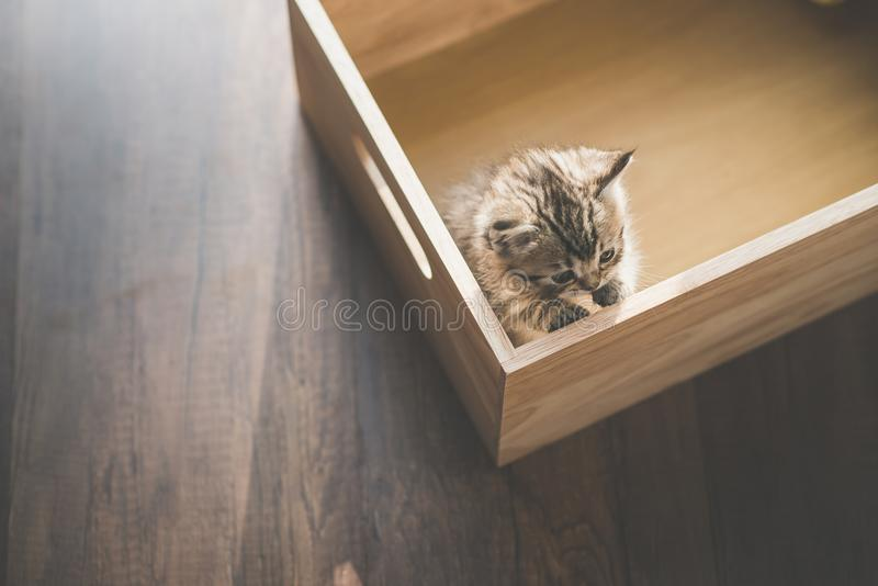 Cute kitten playig in a wooden box stock photo