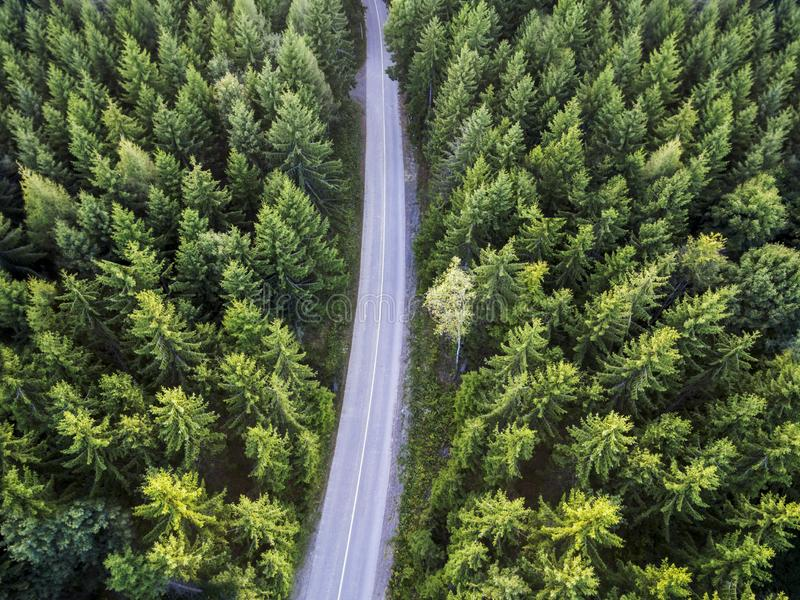 Top view of dark green forest landscape in winter. Aerial nature scene of pine trees and asphalt road royalty free stock images