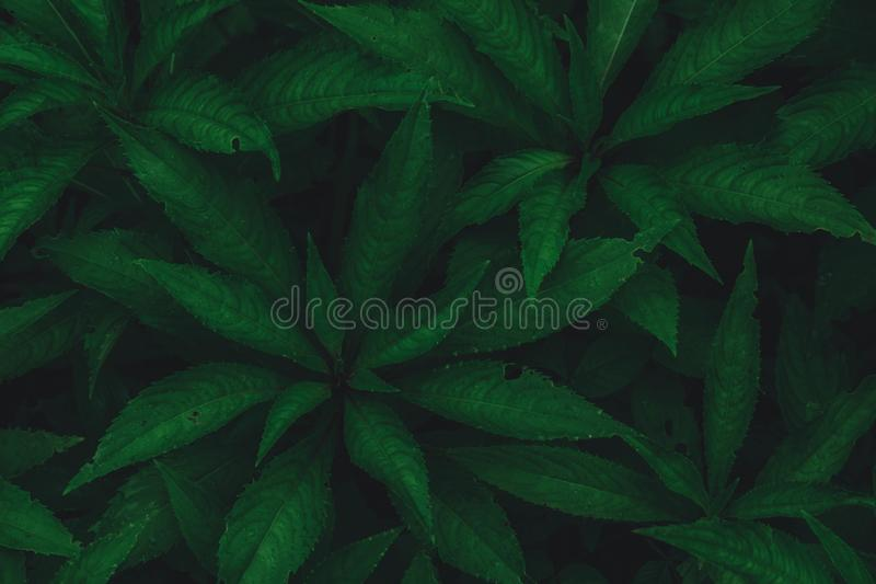 Top view of dark green leaf background royalty free stock photo