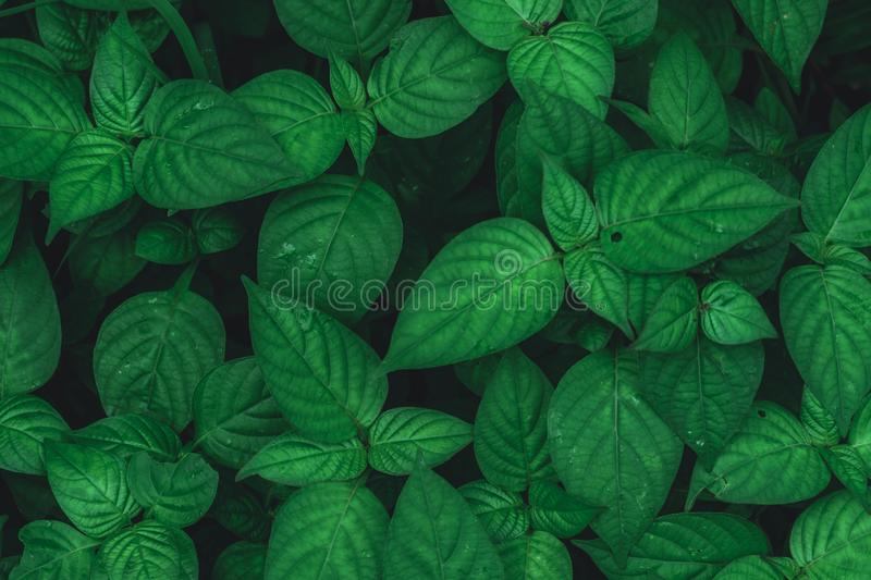 Top view of dark green leaf background royalty free stock photography