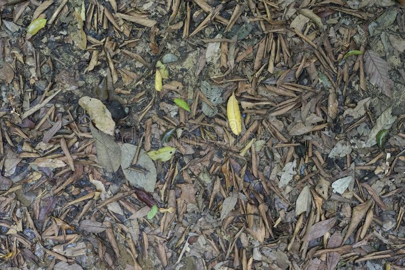 Top view of dead leaves on a jungle`s floor.  stock image
