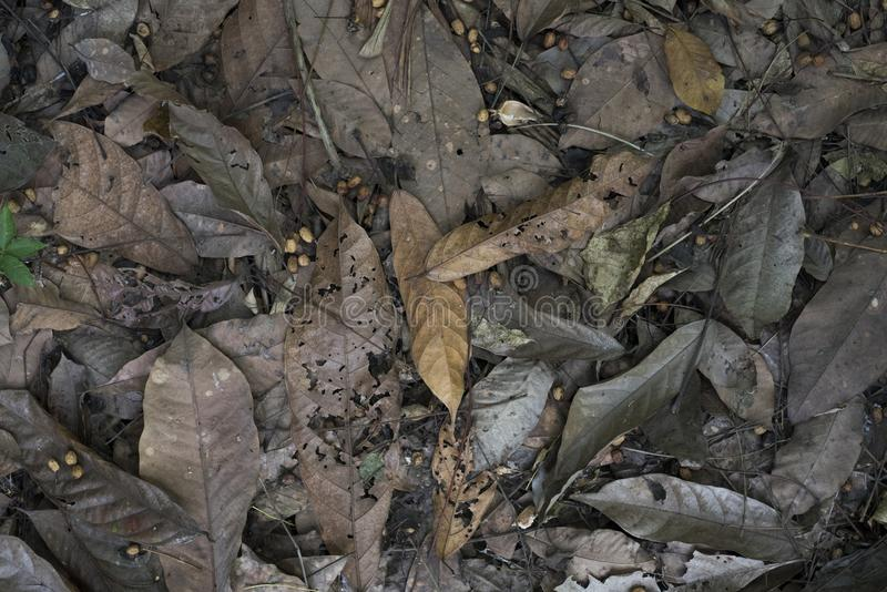 Top view of dead leaves on a jungle`s floor.  royalty free stock photo