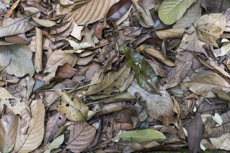 Top view of dead leaves on a jungle`s floor.  royalty free stock photos