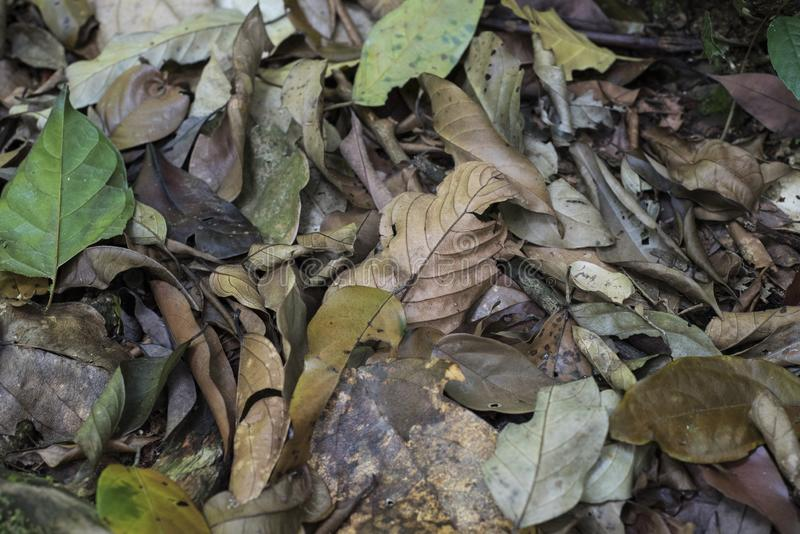 Top view of dead leaves on a jungle`s floor.  royalty free stock image