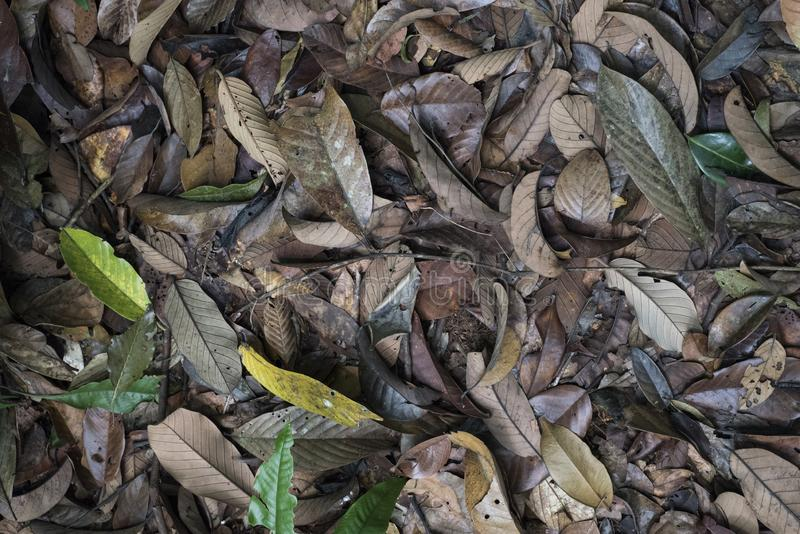 Top view of dead leaves on a jungle`s floor.  stock images