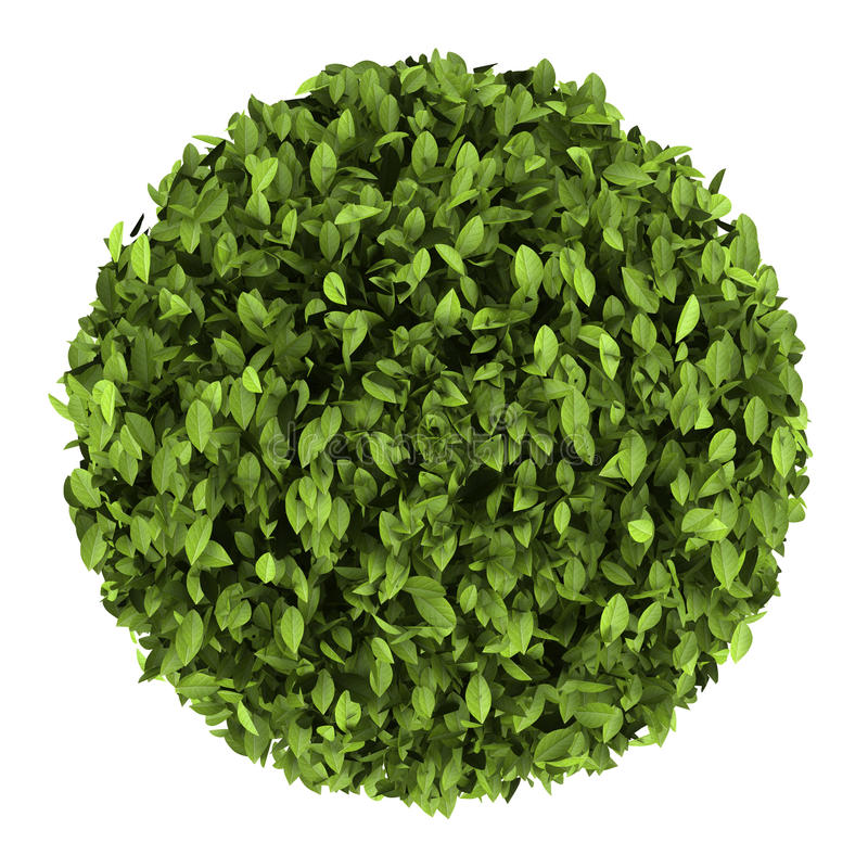 Download Top View Of Decorative Round Plant Isolated Stock Illustration - Image: 26381881