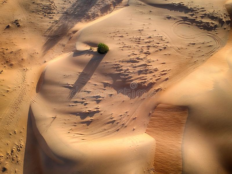 Top view of desert Lompoul in Africa, Senegal. There are desert dunes. The sand is beautiful yellow. This is aerial view. There royalty free stock photo