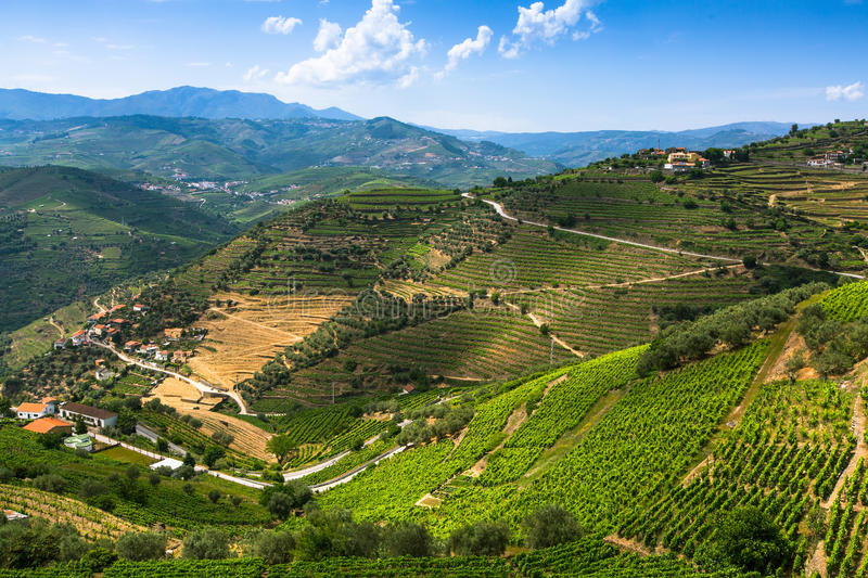 Top view of Douro Valley, Portugal. Vineyards are on a hills royalty free stock photos