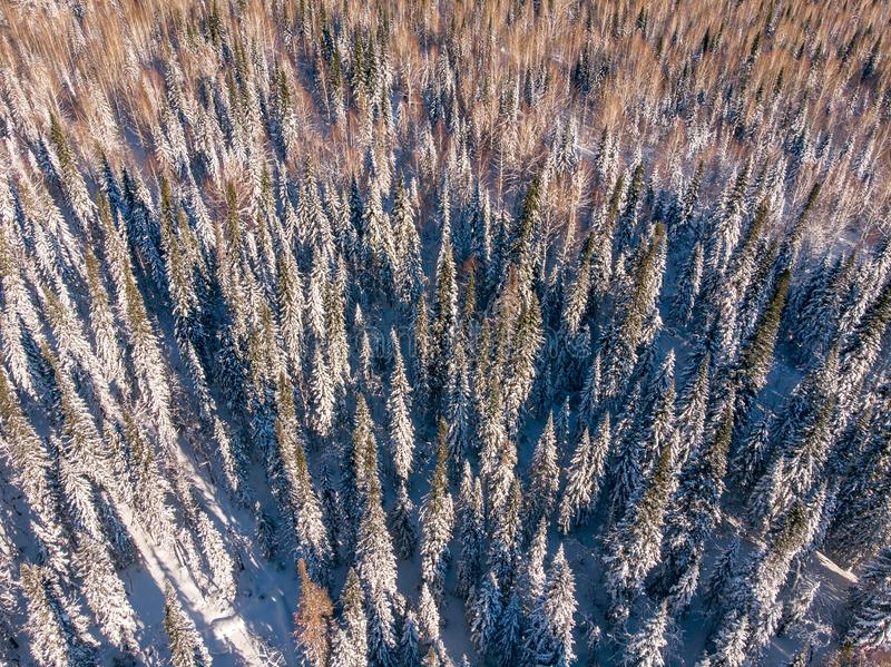 Top view drone forest winter aerial stock photos