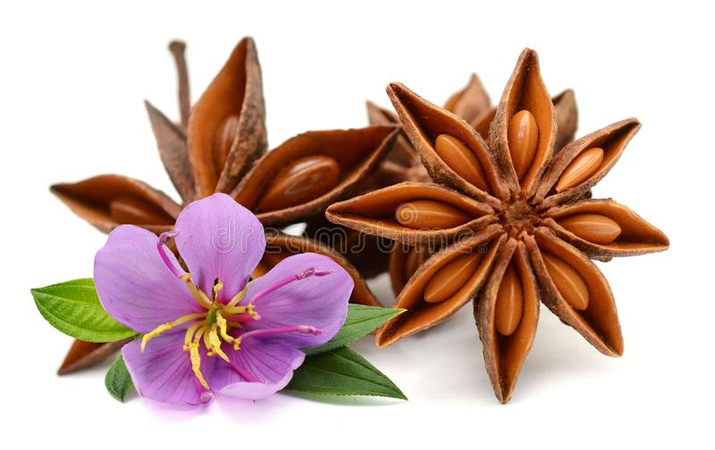 Dry star anise fruit. stock images