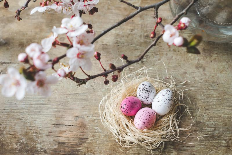 Top view of an Easter nest with white and pink freckled and spring tree branches on wooden background royalty free stock photography