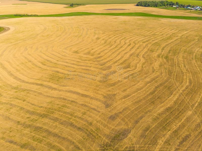 Top view on a field with beveled cereals. Top view on field with beveled cereals stock image