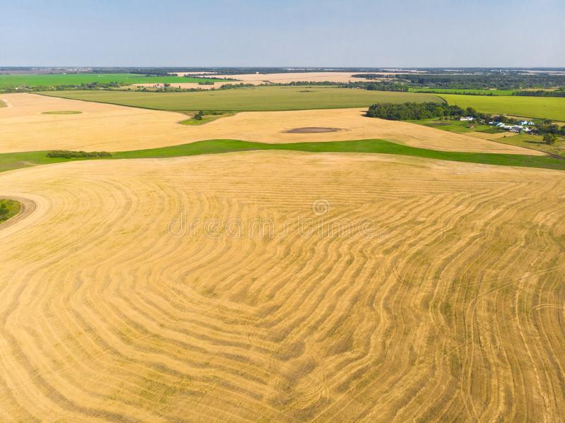 Top view on a field with beveled cereals. Top view on field with beveled cereals royalty free stock photo