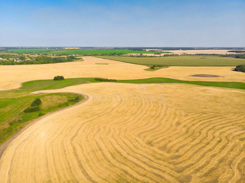 Top view on a field with beveled cereals. Top view on field with beveled cereals royalty free stock images