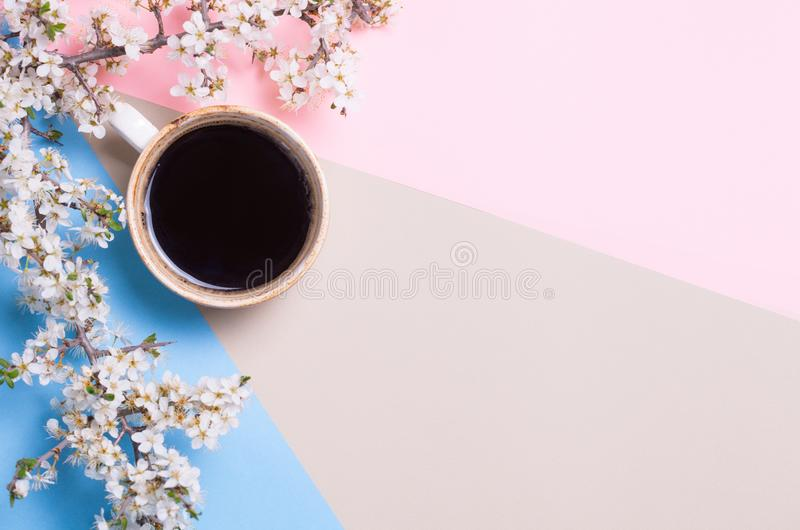 Top view and flat lay of Cup of coffee and blossoming tree branch on pink and blue background. Place for text. copyspace royalty free stock images