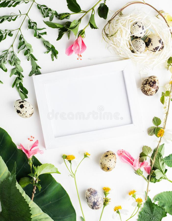 Top view flat lay Easter mockup: white photo frme with quail eggs, daisy flowers and green leaves. Holiday concept royalty free stock photography