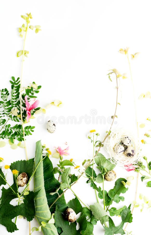 Top view flat lay partly isolated camomile flowers and leaves with quail eggs in paper nest mock up. Easter concept stock images