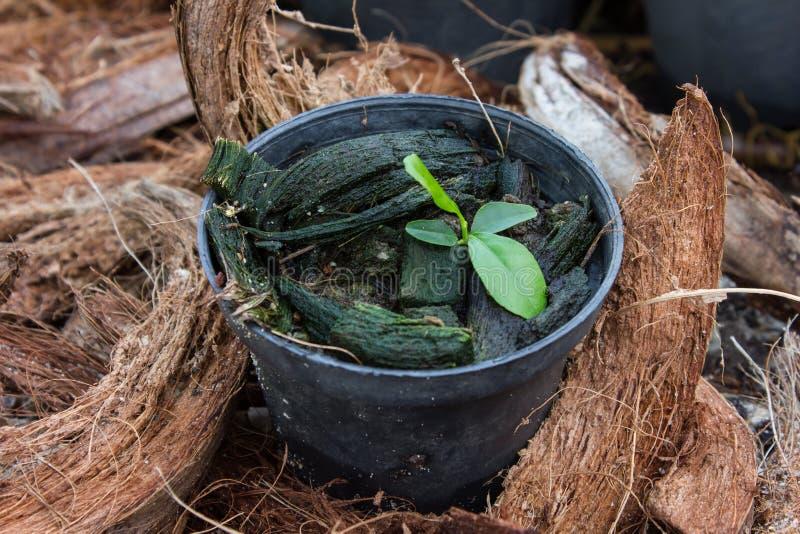 Top view of flower pot. In garden stock photo