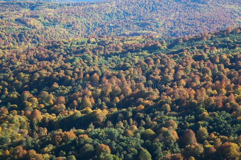 Top view of forest valley. In the fall stock image