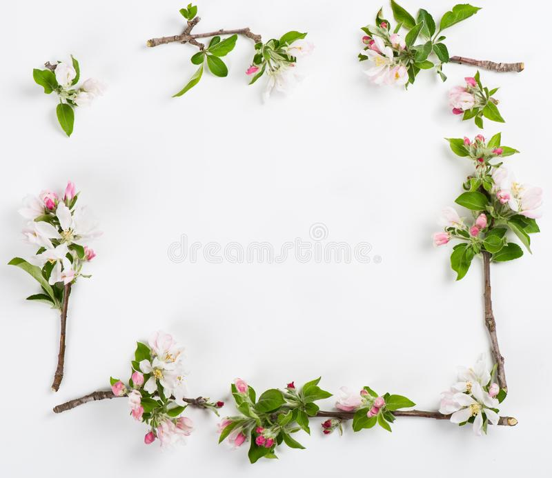 Apple twigs in bloom. Above view. royalty free stock photos