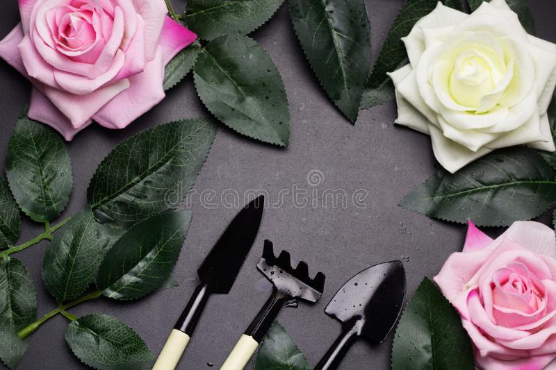 Top view frame of gardening tools ,rose leaves, rose flowers stock photo