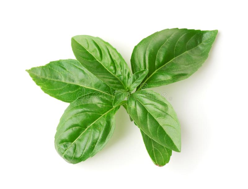Top view of fresh basil leaves stock images