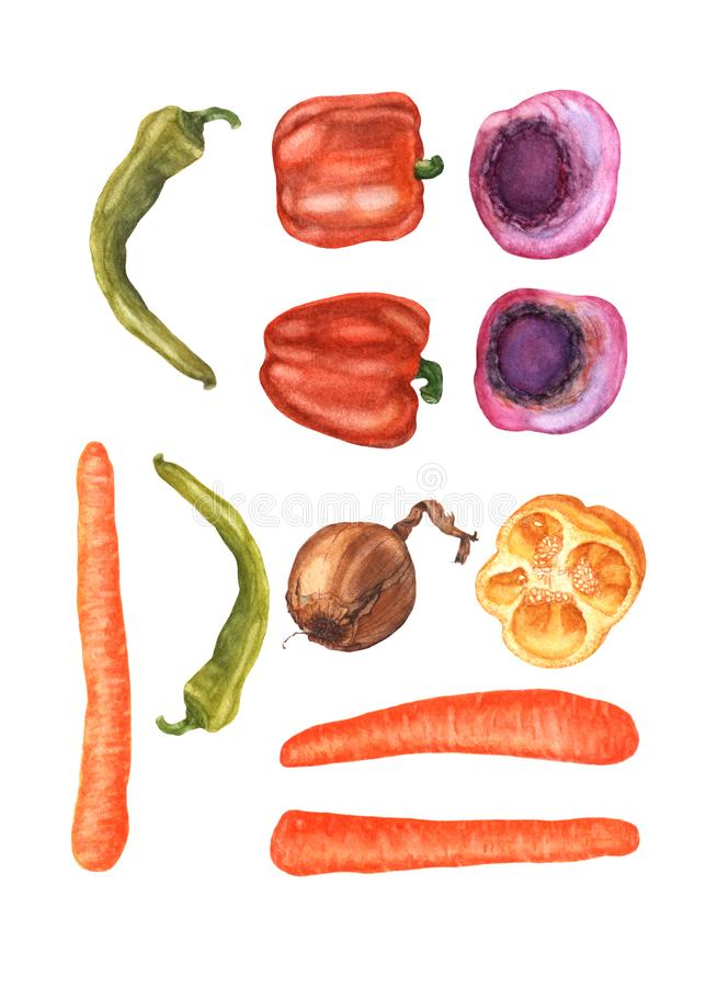 Top view of fresh colorful vegetables set, hand drawn, watercolor. Watercolor hand drawn vegetables, isolated on white background. Top view of beetroots vector illustration