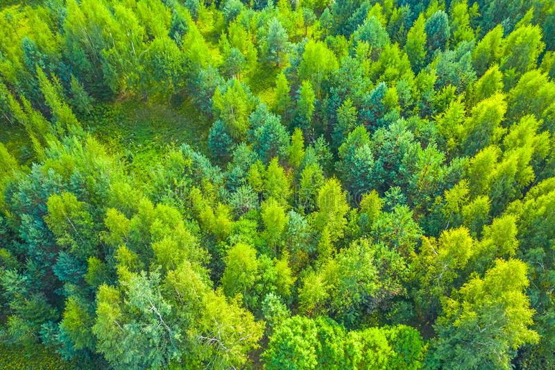Top view of fresh green color forest royalty free stock image
