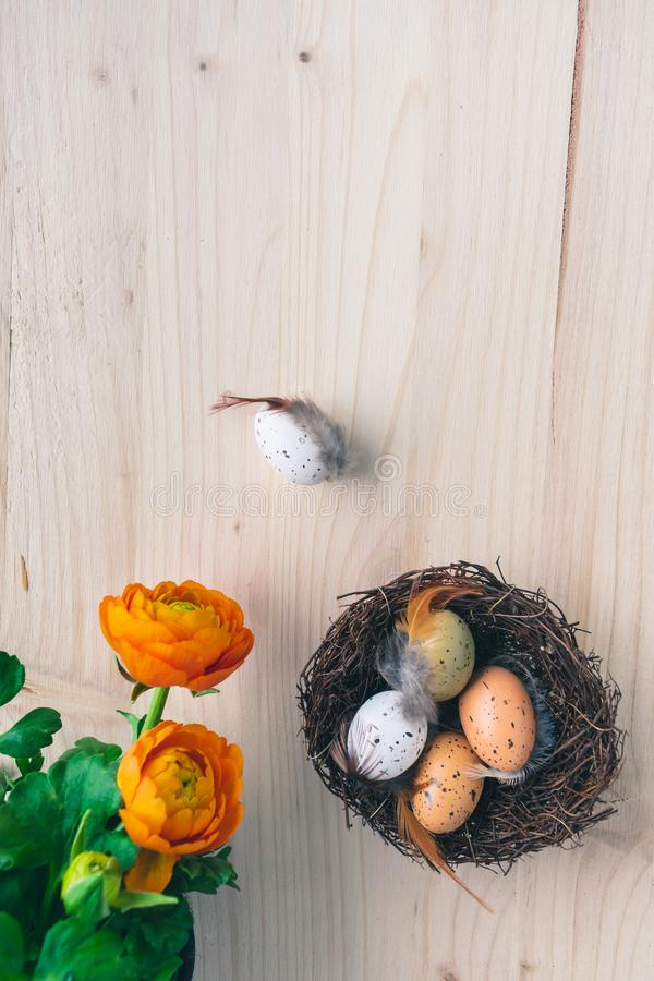 Top view of an Easter nest with orange flowers and and brown and white quail eggs decorations with feathers on wooden background. Top view of fresh orange spring stock images