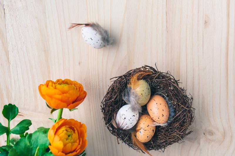 Top view of an Easter nest with orange flowers and and brown and white quail eggs decorations with feathers on wooden background stock photography