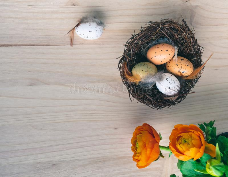 Top view of an Easter nest with orange flowers and and brown and white quail eggs decorations with feathers on wooden background. Top view of fresh orange spring royalty free stock photography