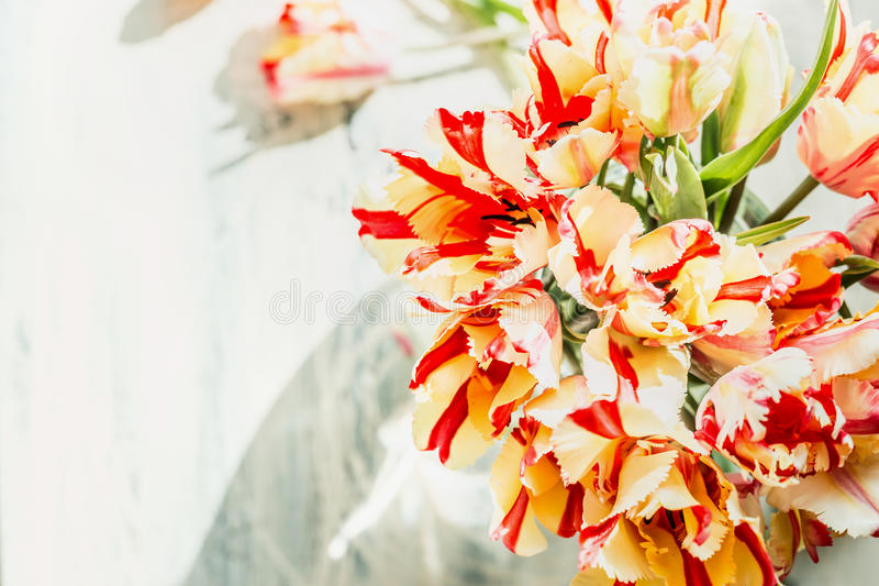 Top view of fresh tulips bunch in sunlight, close up. Springtime royalty free stock image