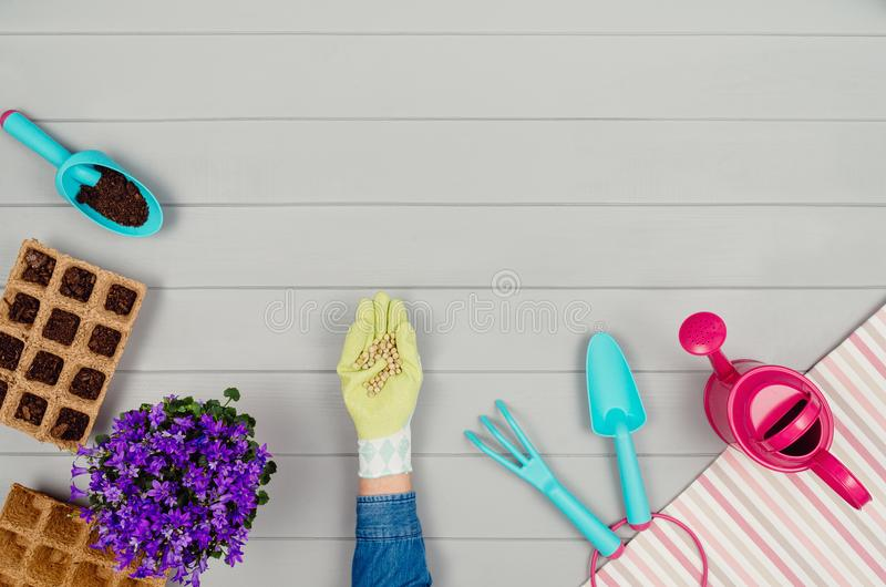 Gardening tools on gray wooden table background top view royalty free stock photography