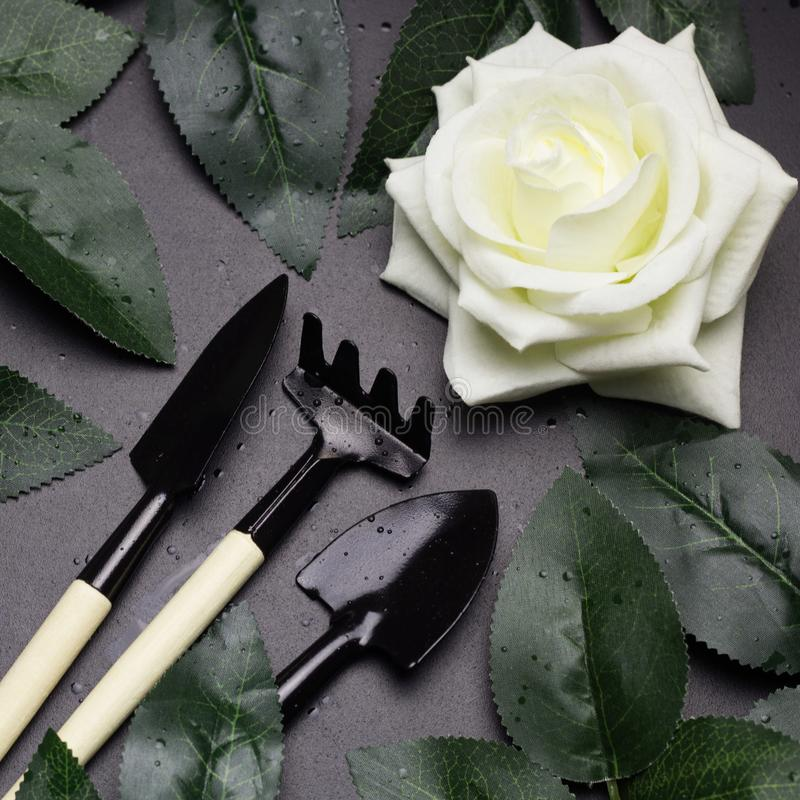 Rose leaves and garden tools frame, spring gardening concept stock photo