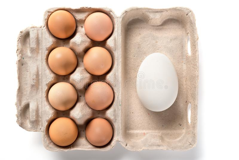 Giant size goose egg and small chicken eggs in a package concept of size comparison royalty free stock photography