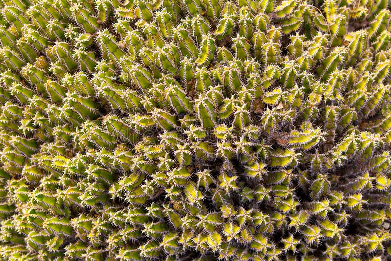 Top view of green cacti stock photography