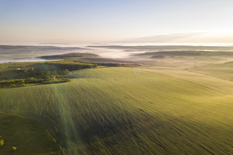 Top view of green cultivated hills and green trees in foggy valley. Spring misty landscape panorama at dawn royalty free stock image