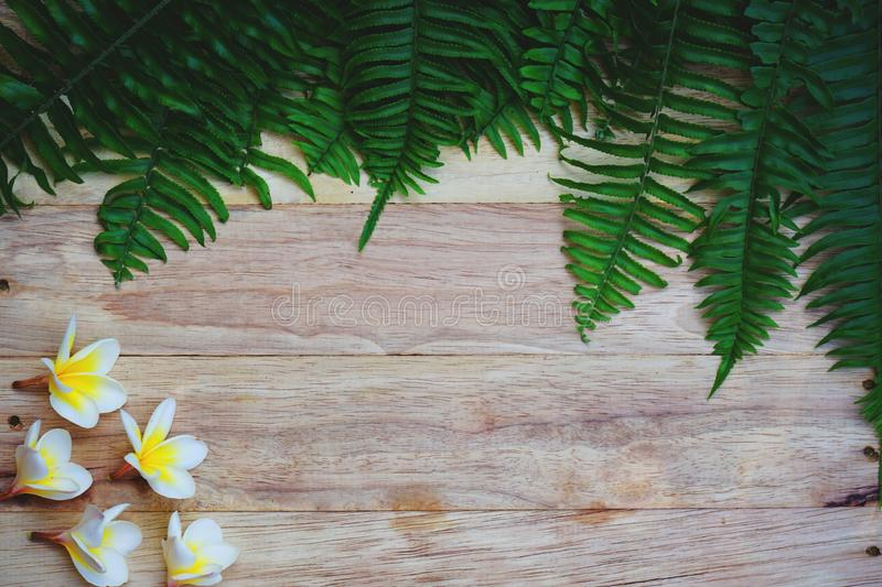 Top view of green fern and flower texture detail background, spa decoration background concept. Copy space stock photos