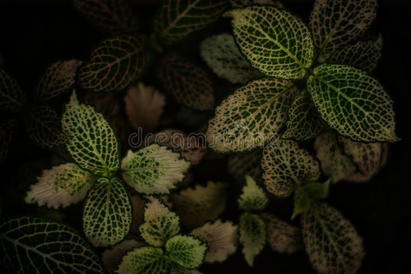 Top view green leaf nature background with full frame royalty free stock photography