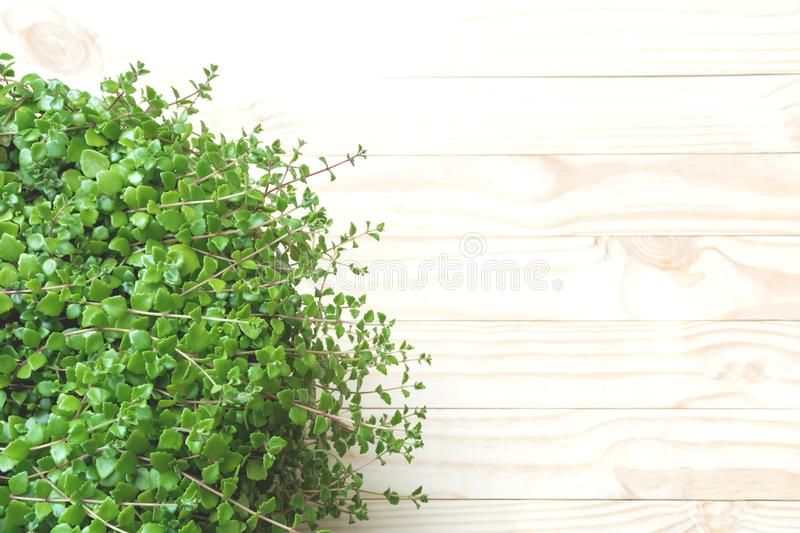 Top view of green plant on wooden table and copy space for insert text. royalty free stock photography