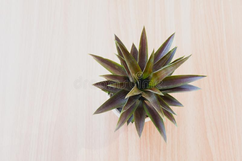 Top view green potted plant, trees in the pot on wooden table stock images